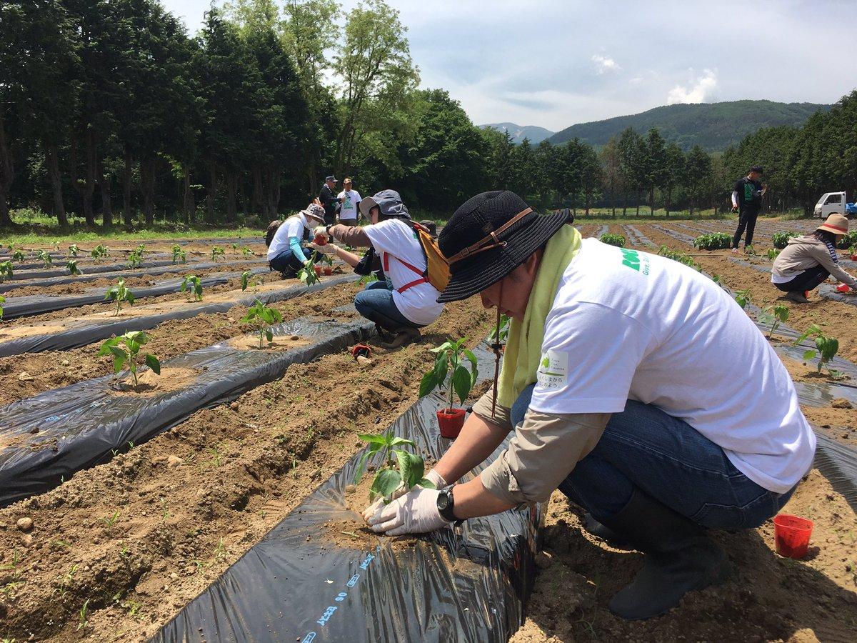 #Rockcorpsjapan Rockcorpsボランティア無事終了! 炎天下での京南蛮の苗植え・カボチャの支柱立て・草むしりと 慣れない農作業でしたが、熱中症にならずよく頑張った