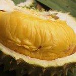 Perghhhh memang terbaik! Musang king fresh dari perak. Rugi betul orang yg tak suka makan durian ni. https://t.co/HIPMYHiZY9