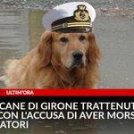 #UltimOra, #Marò, il cane di #Girone trattenuto in India con l'accusa di aver morso due pescatori https://t.co/LLvOhUDjg9
