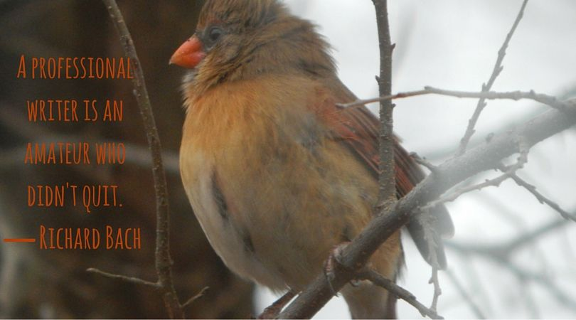 I love the colors of female cardinals. And I don't quit. Except yoga, I did quit yoga.  #amwriting #amreading https://t.co/1uTFCPghO8
