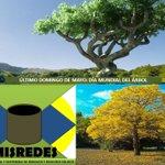 Domingo 29 de Mayo::DÍA DEL ÁRBOL. Puedes plantar y adoptar un árbol. https://t.co/7YBetijEml https://t.co/Pos0GwFdCp
