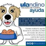 Ayudemos a la Brigada Canina de la ULA necesitan Alimento, Implementos de Limpieza, Jabon para Bañarlos #CrisisUniVE https://t.co/92FSWzrHde