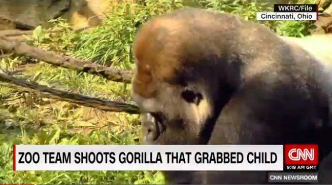 "Put endangered gorilla in zoo. Allow child into gorilla's cage. Shoot gorilla dead. Redefine ""conservation"". https://t.co/TeWZJSBuE9"