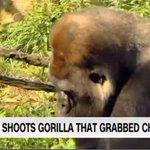 "Put endangered gorilla in zoo. Allow child into gorillas cage. Shoot gorilla dead. Redefine ""conservation"". https://t.co/TeWZJSBuE9"