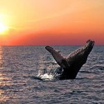 Urgente: Brigada de ballenas jorobadas acaban de llegan a Manabí para apoyar al turismo #Ecuador #Fotoec https://t.co/ZmtW5tFcnq
