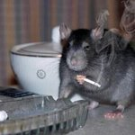 """Ratatouille? havent heard that name in years."" https://t.co/Qgko7wGzOU"