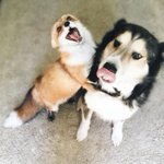 ITS A FOX AND A DOG A FOX AN D A DOG THIS IS THE REAL LIFE FOX AND THE HOUND https://t.co/XzFNNWRdwX