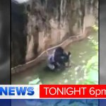 Also @9NewsBrisbane Controversial move to kill a gorilla when a boy ends up in his compound. @TimArvier9 #9NewsAt6 https://t.co/wiqwYB7eKC