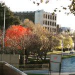 Red leaves at the @936hobart roundabout #tasmania https://t.co/0ZbOFrKfNo