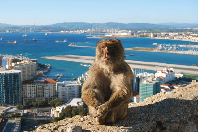 Get a piece of the Rock: the unique experience that is Gibraltar!🏻