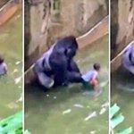 Matan leones por suicida q se mete en su jaula Matan gorila xq los padres descuidan al niño q cae a su lado NOS ODIO https://t.co/tCkZy0JeCq