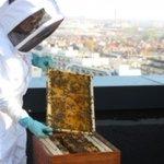 60 000 #abeilles ont emménagé sur le toit de l'ENGIE Tower à #Bruxelles. #biodiversité https://t.co/qAmmDgz0eW https://t.co/PWmFxqtnJC