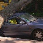 Zum Glück wurde niemand verletzt: Ein Baum ist in #Berlin #Neukölln auf ein Auto gestürzt. https://t.co/U97cmwC53M https://t.co/Fc1L6AHyb1