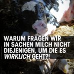 KEINE Stimme beim #Milchgipfel für die eigentlich Leidtragenden. Das Leben einer Kuh: https://t.co/VCXznw1OL7 #Milch https://t.co/baj8mAtOM5
