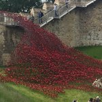 Poppies at #Lincoln Castle https://t.co/1VSrEXBUZc