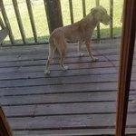 Dog found in rockfield on Logan county line @joeimel https://t.co/zHJM4vDfzE