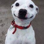 o catiorro sorrindo pra alegrar sua vida https://t.co/Zhnk8Ka2LW