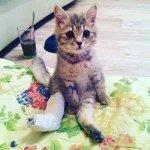 Comel gila kucing ni walaupun kaki dia patah😍 https://t.co/YNfkeIB0Oj