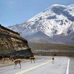 El imponente volcán Chimborazo y sus vicuñas #ecuador https://t.co/3ktLVLyQ3d