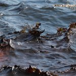 Кацапы нам Крым угробят. Диверсия в Алупке: в море вылили восемь тонн мазута. Борьба за пляж https://t.co/WN84E4iEPI https://t.co/iPhLaksO6t