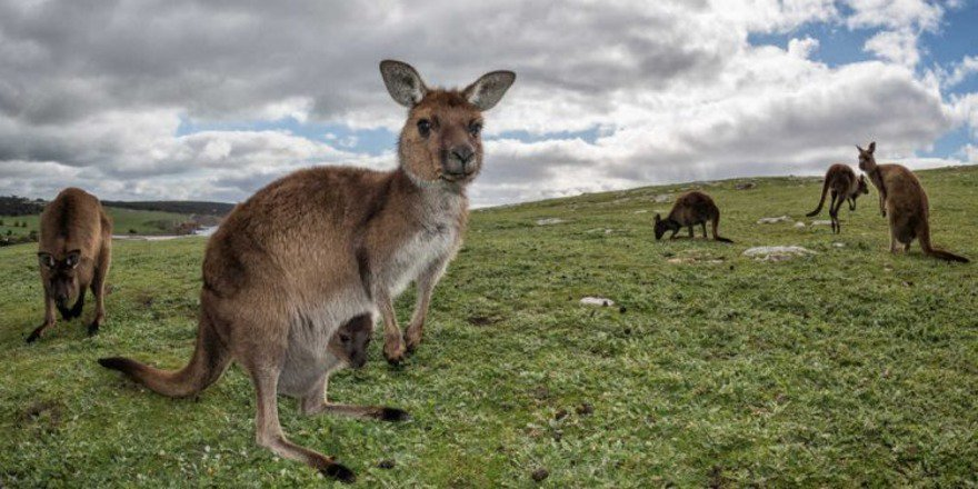 How to See Australia's Wildlife Without Going to a Zoo