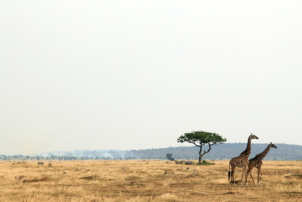 A self-drive safari opens up the wild world of the Serengeti, via @EveningStandard »