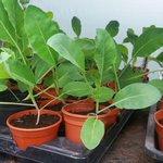 Hollybush Plant Sale on Sunday 19th June (11am - 3pm), now includes an Amazon Rainforest Trail #Kirkstall #Leeds https://t.co/fAAxTYBBoi