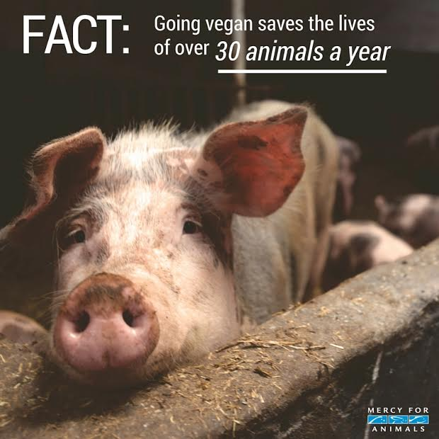 RT @MercyForAnimals: #FACT: By going #vegan you can save 30 animals a year! #WorldMeatFreeDay #MondayMotivation https://t.co/AfhyFqllTw