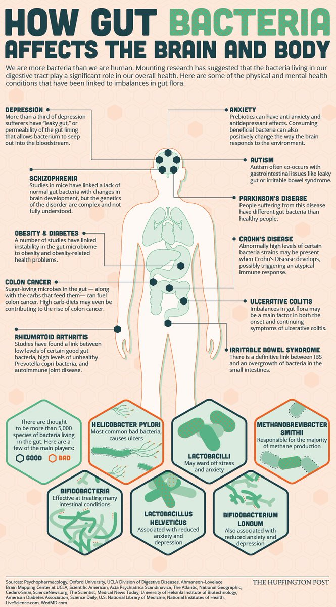 In case you missed it, #bacteria plays a major role in your body's health - from head to toe! #Microbiome #Probiotic https://t.co/AoIeYvYipE