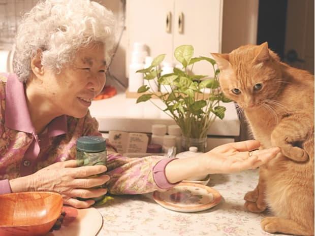 길고양이로 살던 순돌이가 할머니와 만났습니다. 고양이 입양캠페인 사진전 무심한 듯 다정한과 동명의 에세이를 준비합니다.  밀어주기 https://t.co/kGoKm1BrAA https://t.co/oldK0J1g11