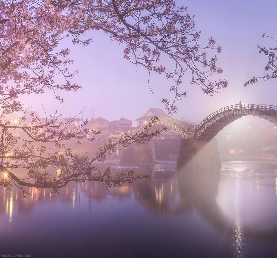 Sakura at Kintai bridge, #Japan | Photography by ©Daniel Korzhonov https://t.co/GyQ60vmPA2