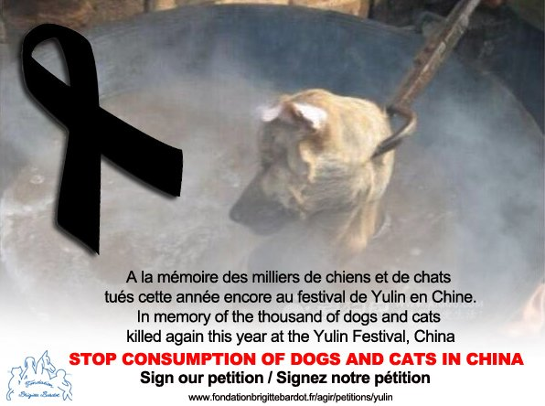 RT @FBB_PORTEPAROLE: #StopYulin Signez notre pétition / Sign our petition https://t.co/NyOLUIUtT1 https://t.co/D1PWhr6fqX