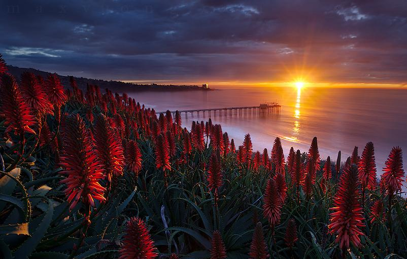 Scripps Pier, La Jolla, California | Photography by ©Max Vuong https://t.co/hbXSvFJI9d