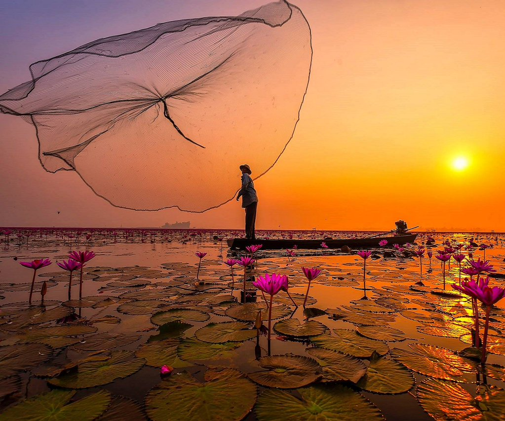 Sea of pink lotus in Nong Harn lake, Thailand | Photography by ©Extra Suriyachat https://t.co/U1DRI7eV0f
