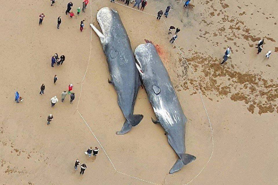 13 NSea sperm whales were stranded on German coast--> stomachs were full of #plastic https://t.co/yQcnpL03wM https://t.co/byLUGUlx66