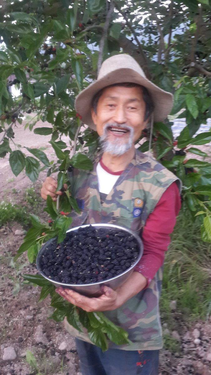 매실 수확에 잊어버린 오디나무에서 오분만에 이렇게 싱거러운 오디를 맛보고 있습니다.ㅎㅎㅎ https://t.co/y4hDQRqiZh