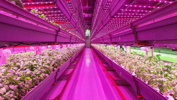 Why Chicago Is Becoming The Urban Farming Capital https://t.co/2jN4hwYHdb via @FastCompany #Innovation #Tech https://t.co/SLWApXMoRN