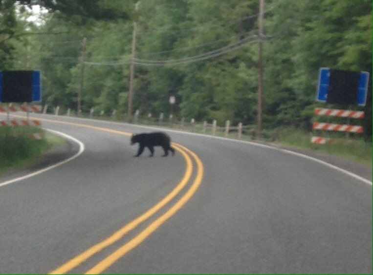Bear! Near the entrance to @poconoraceway https://t.co/UtyB1AhWHr