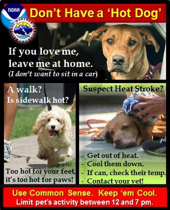 Think about it - They're wearing a fur coat in this heatwave! Take special care of yours. #heatwave #dogs #cawx https://t.co/foenoroV62