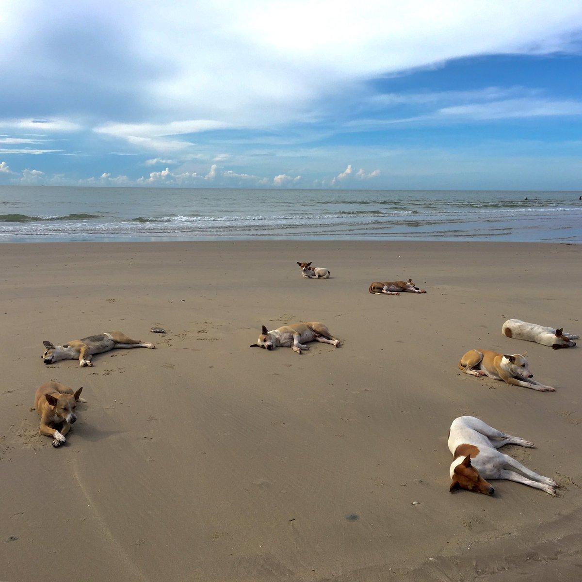 พบหมาทะเลรับรังสียูวีเอ ยูวีบี และวิตามินบีแก้คัน อยู่ที่หาดชะอำครับ
