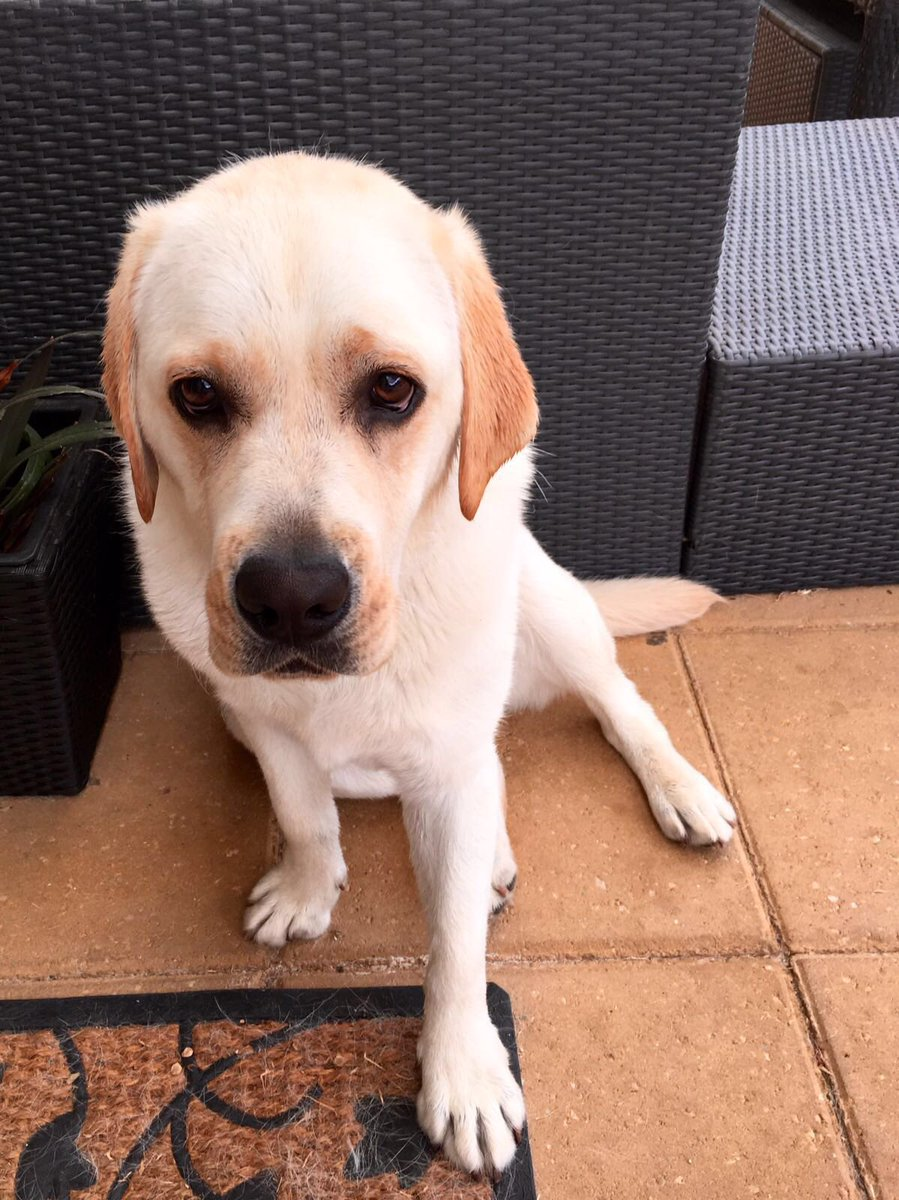 LOST DOG!! In the Geelong area. His name is Trevor. Please retweet https://t.co/2LpDvgBEKt