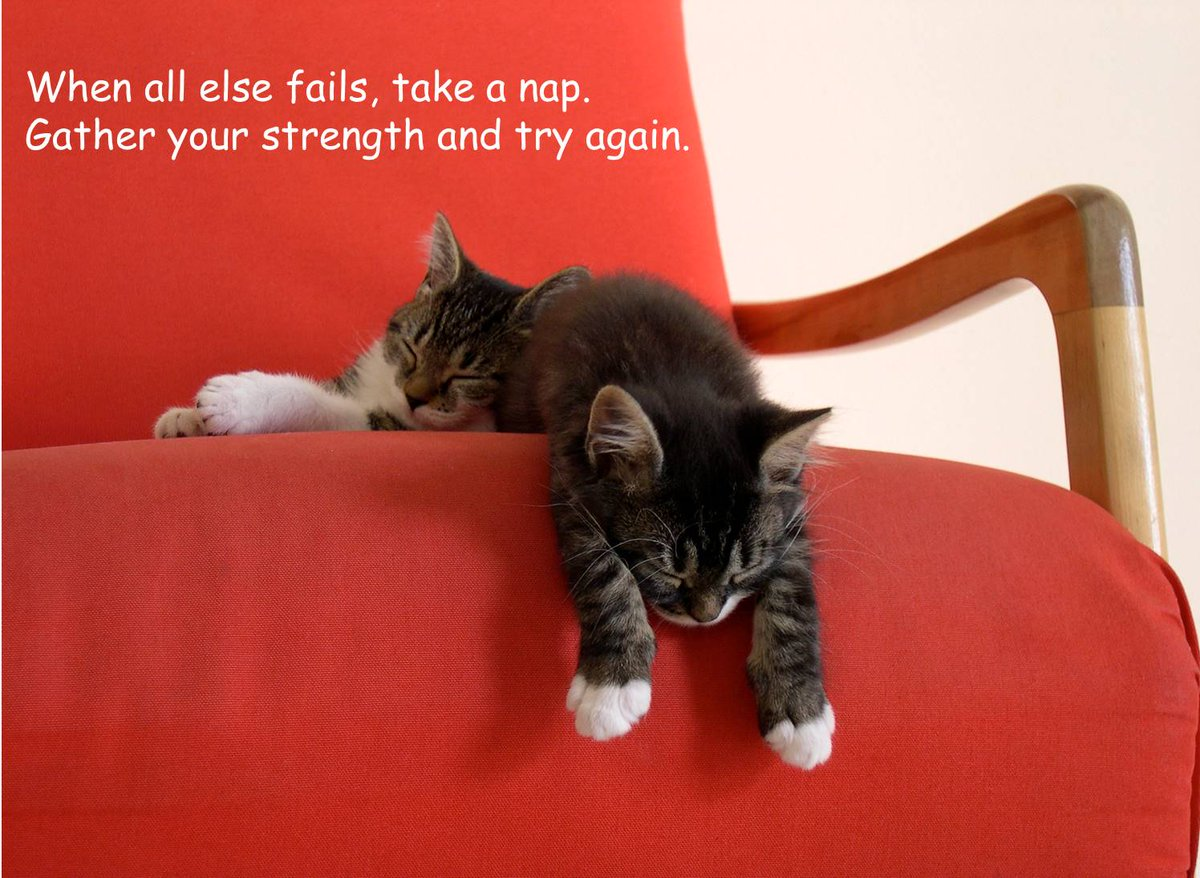 When all else fails...take a nap. Gather your strength and try again. #ThinkBIGSundayWithMarsha https://t.co/NA0jLxfnKa