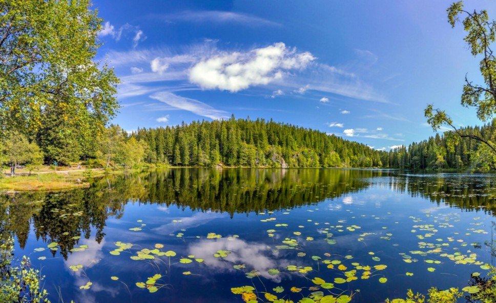 березы берег озеро  № 1195461  скачать