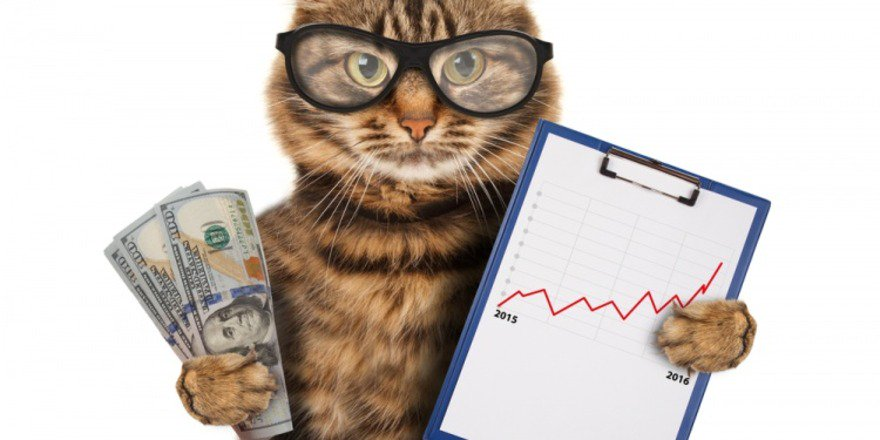 5 Animals With Better Careers Than You