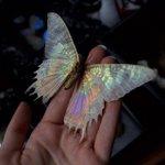essa borboleta é mais bonita q eu https://t.co/wggE2UCG3E