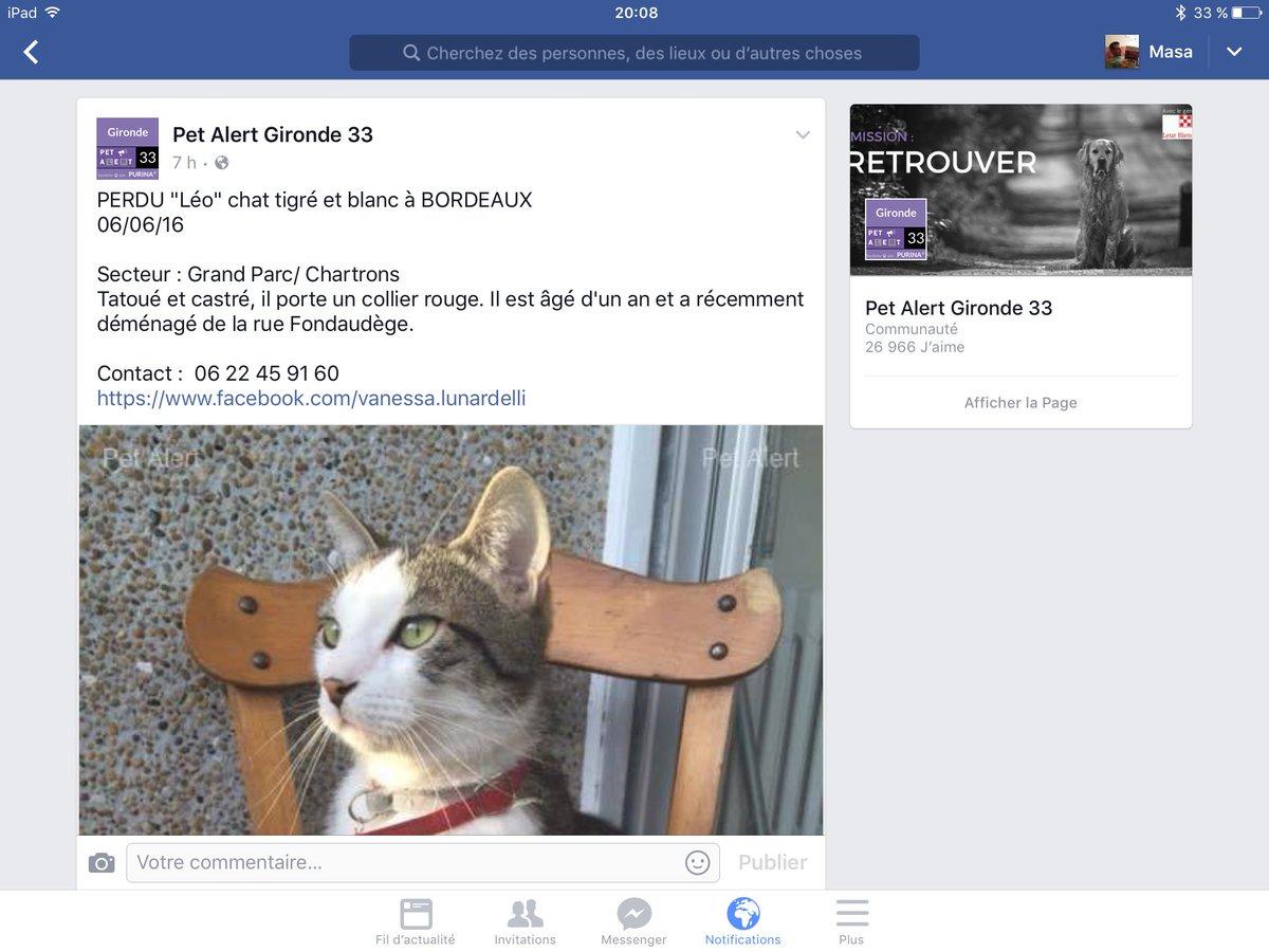 Bon apparemment, le lien FB ne fonctionne pas pour tout le monde. Donc on recherche notre chat, merci. #Bordeaux https://t.co/AsnZosCEO9