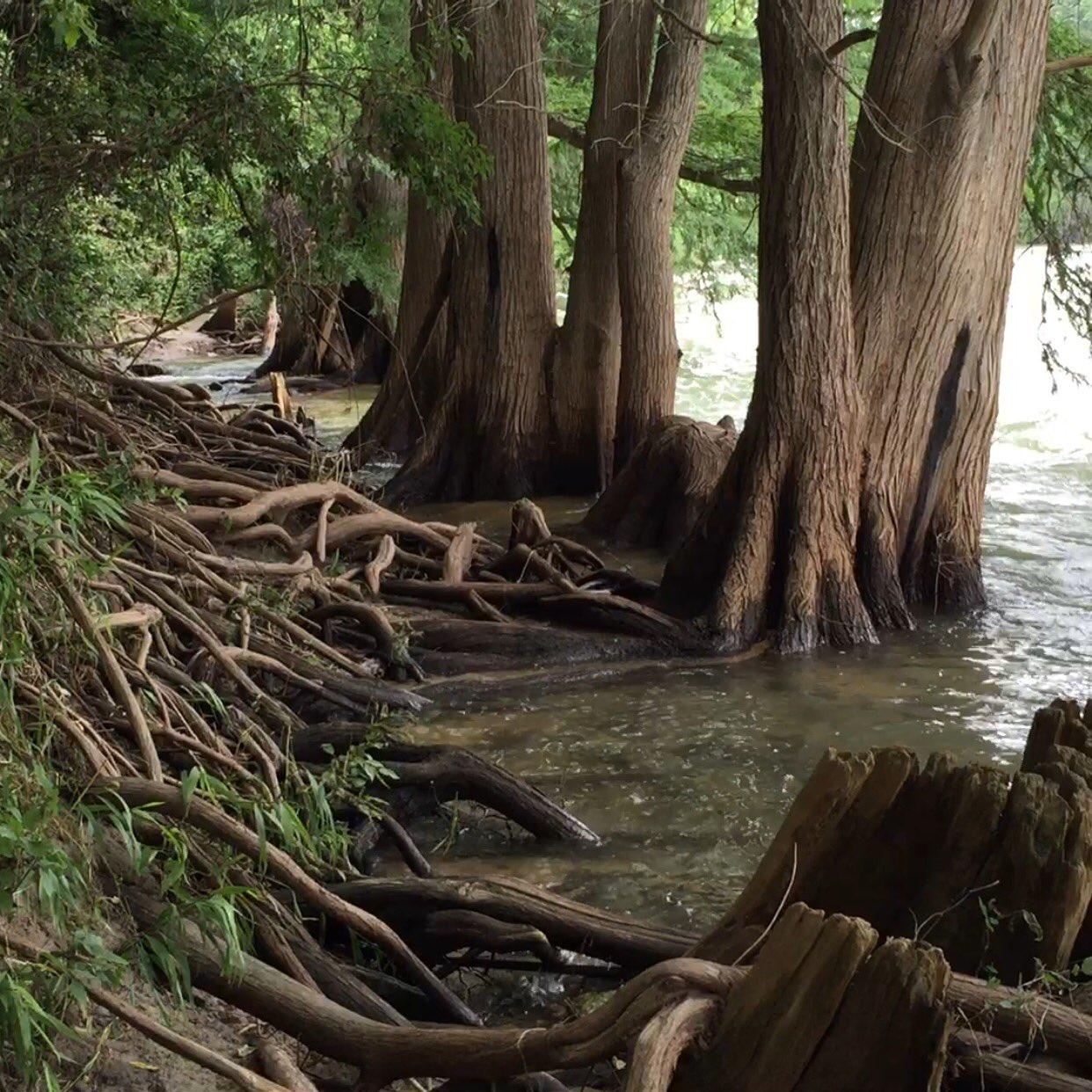 #Texas #hillcountry   #guadaluperiver   #nature #wilderness #yogi #love https://t.co/acWTN2dnCY