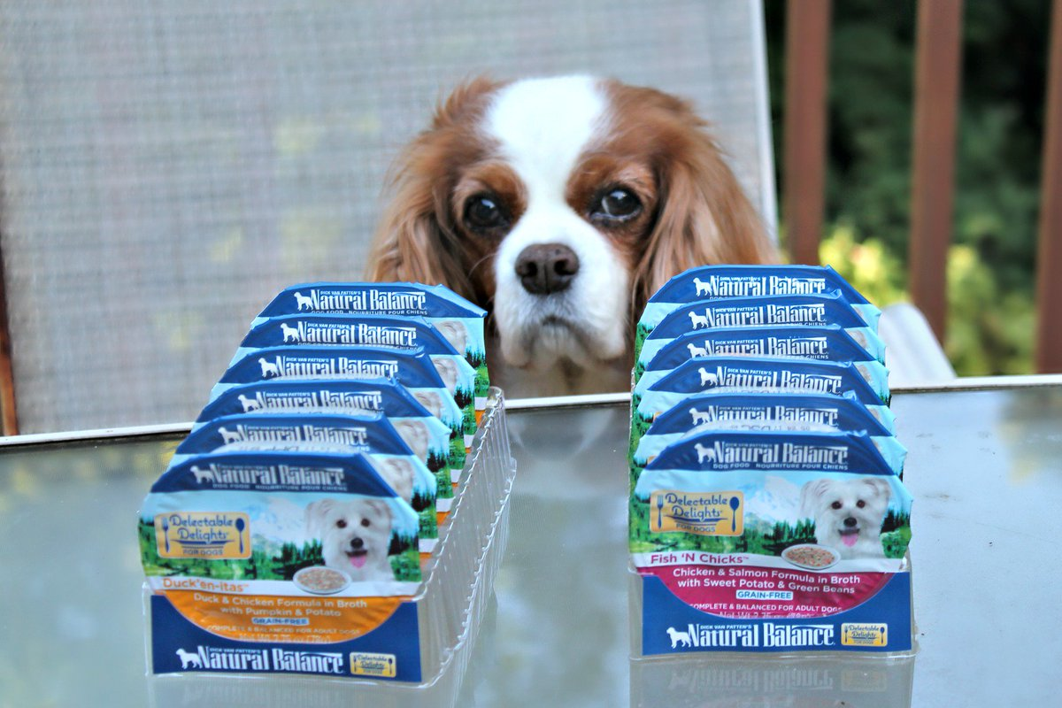 Which #NaturalBalance Delectable Delights Wet Cups will be your dog's favorite? https://t.co/Q7NATSAMAw #sponsored https://t.co/CNzcVEtn2y