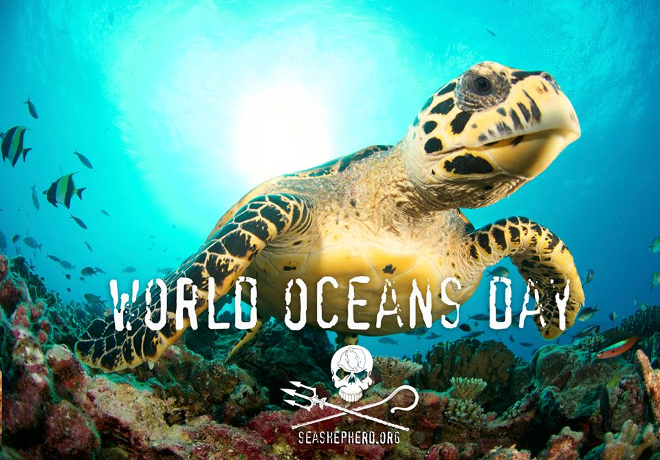 RT @SeaShepherdSSCS: #BREAKING: On #WorldOceansDay, Sea Shepherd announces next campaign to protect our oceans. https://t.co/Ffv48aCWsO htt…
