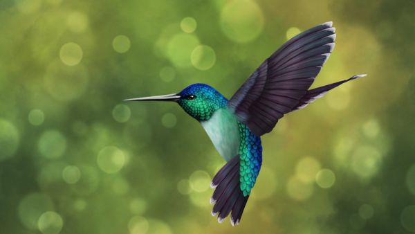 """""""Hummingbirds are less flesh than fairies, little more than bubbles fringed with feathers—air wrapped in light."""" https://t.co/SkgcCfK8bg"""